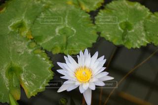 近くの花のアップ - No.1127787