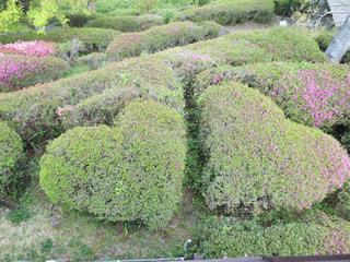 庭園の緑の植物の写真・画像素材[1128411]