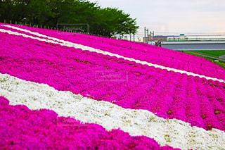 近くの花のアップの写真・画像素材[1131900]