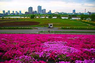 フィールドの花 - No.1131902