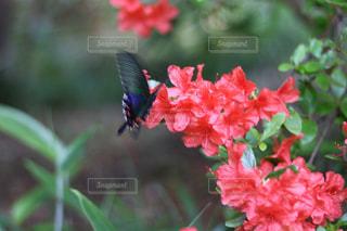 近くの花のアップ - No.1141508