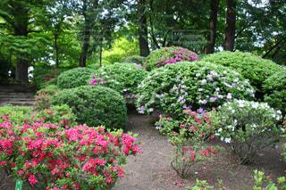 ピンクの花が庭園に - No.1141607