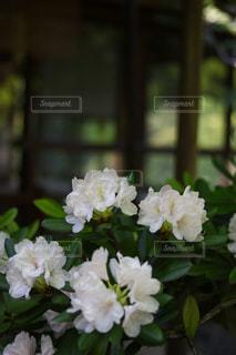 近くの花のアップ - No.1141642