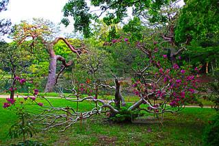 緑豊かな緑のフィールドの真ん中の木 - No.1141689