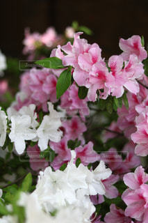 近くの花のアップ - No.1141691