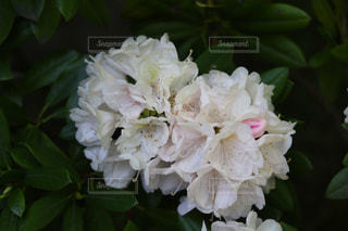 近くの花のアップ - No.1141693