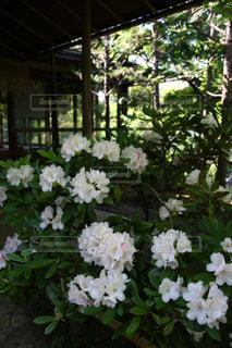 植物の白い花 - No.1141706