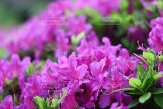 近くの花のアップ - No.1141719
