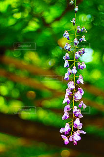 近くの花のアップ - No.1141724