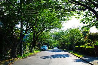 道の端に木のパスの写真・画像素材[1158311]