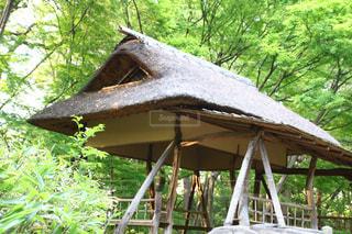 背景の木と家の写真・画像素材[1158329]