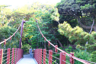 フェンスに架かる橋の写真・画像素材[1159354]