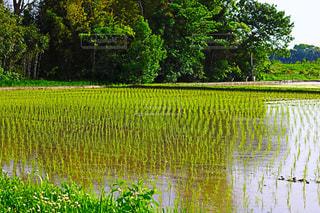 水の体の横に草の池の写真・画像素材[1163703]