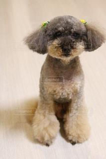 近くに犬のアップの写真・画像素材[1184127]