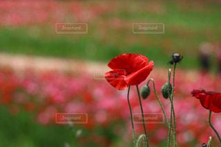 近くの花のアップの写真・画像素材[1197121]