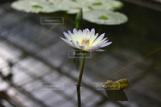 近くの花のアップの写真・画像素材[1197292]