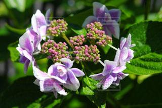 近くの花のアップの写真・画像素材[1219015]