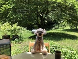 芝生に座っているクマの写真・画像素材[1222116]