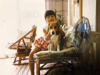テーブルの上に座っている犬の写真・画像素材[1233319]