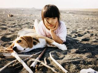 ビーチに座っている犬の写真・画像素材[1233330]