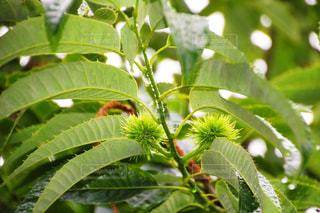 近くの緑の植物をの写真・画像素材[1236300]