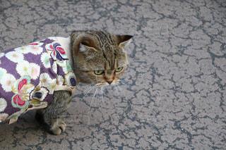 地面に横になっている猫の写真・画像素材[1255273]