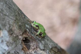 岩の上に座っているカエルの写真・画像素材[1265687]