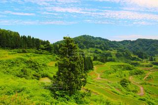 近くに緑豊かな緑の丘陵のアップの写真・画像素材[1269937]