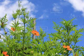オレンジ色の花でヤシの木のグループの写真・画像素材[1388930]