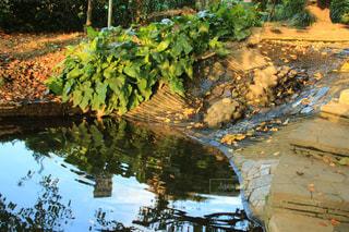 近くに池のアップの写真・画像素材[1414950]