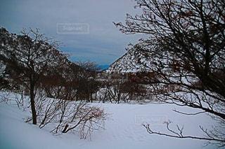 雪に覆われた木の写真・画像素材[1415531]