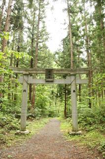 森の真ん中に座っている木製のベンチの写真・画像素材[1425978]