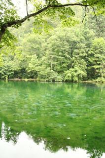木々 に囲まれた水の体の写真・画像素材[1425986]