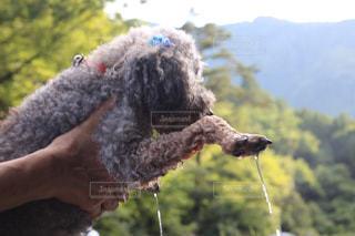 近くに犬を持っている人のの写真・画像素材[1426058]