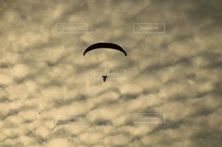 空を飛んでいる鳥の写真・画像素材[1480774]