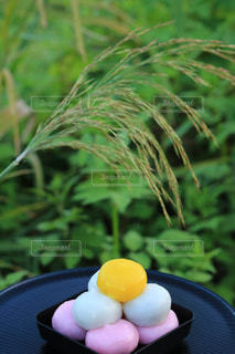 プレートの卵の写真・画像素材[1480834]