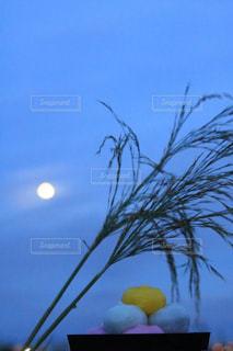 晴れた日にヤシの木のグループの写真・画像素材[1480963]