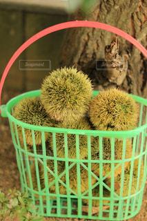 緑の植物のバスケットの写真・画像素材[1481035]