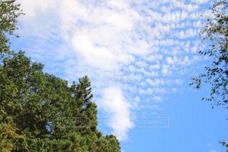 空,雲,青空,うろこ雲,秋空,飯能,大鳩園,名栗川