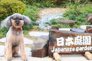 犬,トイプードル,箱根,芦ノ湖,小型犬