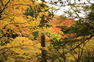 自然,紅葉,観光地,景色,観光,奥多摩,フォトジェニック,インスタ映え