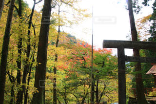 自然,紅葉,観光地,景色,観光,ハイキング,奥多摩,フォトジェニック,インスタ映え