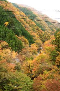 自然,紅葉,観光地,山,景色,観光,ハイキング,奥多摩,フォトジェニック,インスタ映え