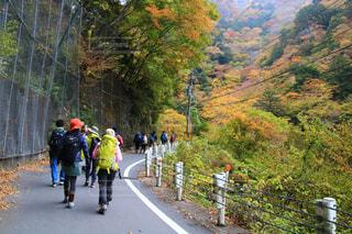 自然,紅葉,観光地,山,景色,観光,ハイキング,フォトジェニック,インスタ映え