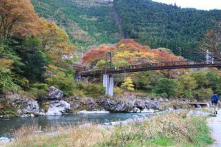 自然,橋,紅葉,川,観光地,山,景色,観光,ハイキング,奥多摩,フォトジェニック,インスタ映え