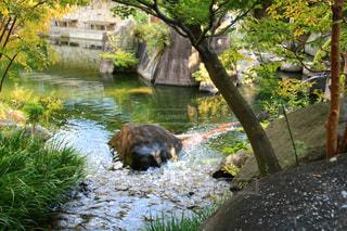 観光地,池,観光,日本庭園,鯉,目白庭園,豊島区