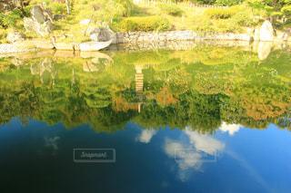 近くに池のアップの写真・画像素材[1598743]