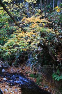森の中の滝の写真・画像素材[1611847]