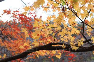 木の枝にとまった鳥の写真・画像素材[1611886]