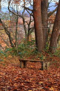 ベンチは森の真ん中に座っています。の写真・画像素材[1611887]